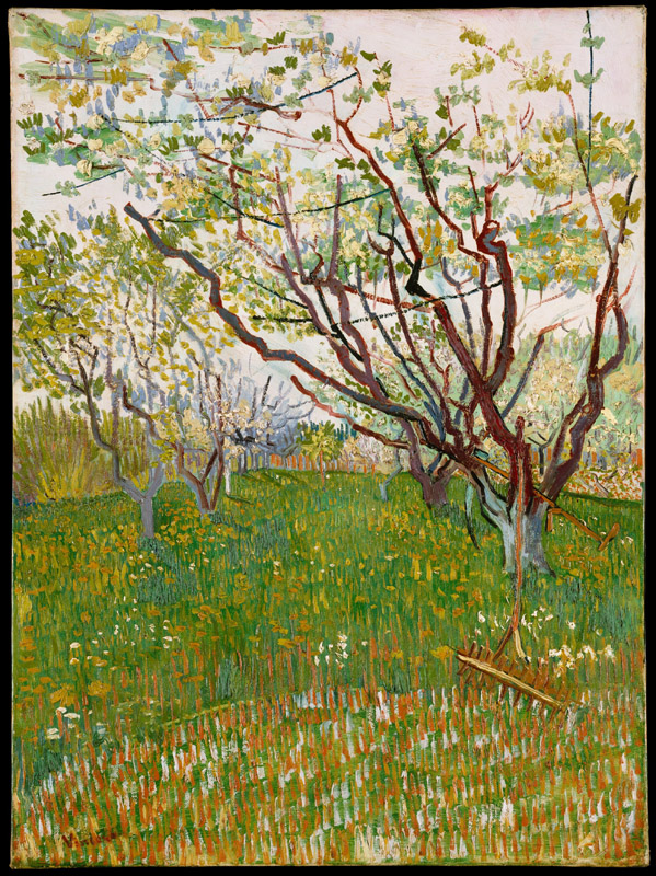 Vincent van Gogh--The Flowering Orchard
