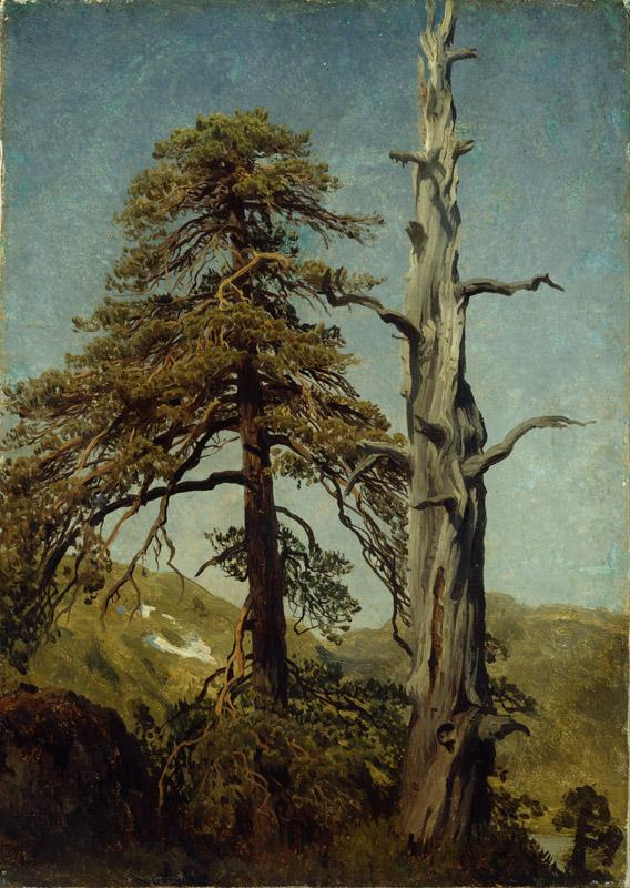 August Cappelen - Study of Trees