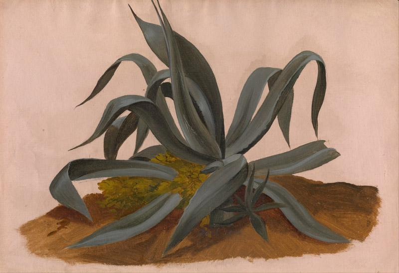 Johan Christian Dahl - Study of an Agave