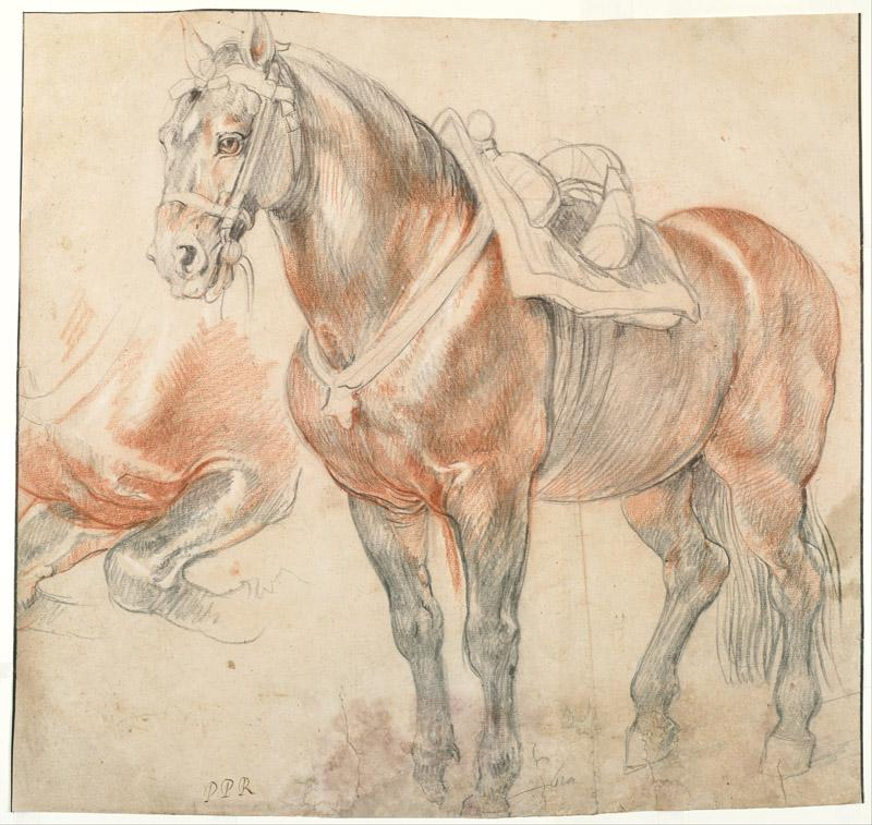 Peter Paul Rubens (1577-1640)-Saddled Horse, c